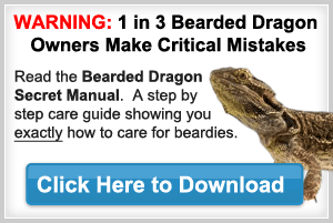 Bearded Dragon Names For Your Bearded Dragon Pet : Bearded